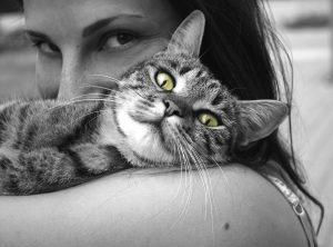 animals-617305_1280