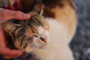 cat-1052652_1280