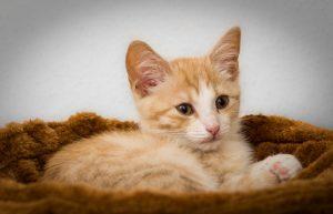 cat-1198863_960_720