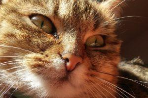 cat-1288218_1280