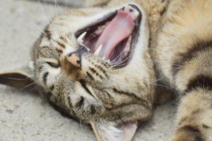 cat-1327949_1280
