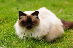 cat-1353029_960_720