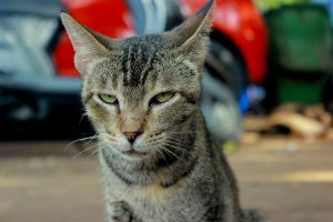 cat-390052_1280