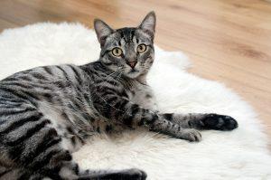 cat-468232_960_720