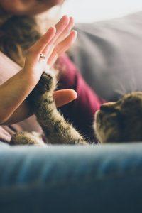 cat-691175_960_720
