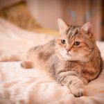 猫と赤ちゃんの寝室は分けるべき?同居生活の注意点を紹介!
