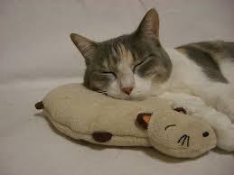 腕枕猫16