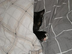 腕枕猫14