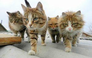人気猫12