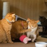 猫がおもちゃを水に入れる習性には意味があった!理由とは?
