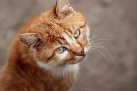 猫 寄生虫撲滅3