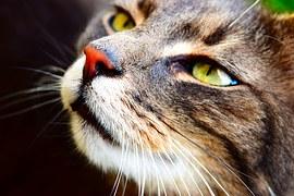 唸る 猫8