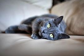 猫 寄生虫 人間11