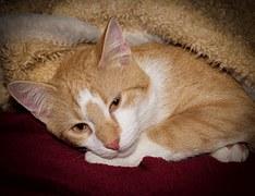 腕枕猫11