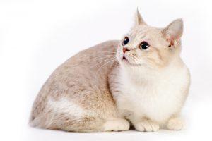 人気猫20