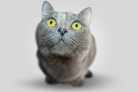 猫 口元1