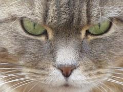 唸る 猫3