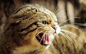 唸る 猫2