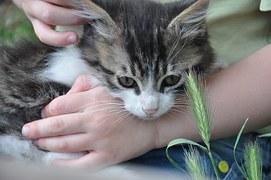 猫 寄生虫撲滅2