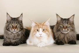 人気猫17