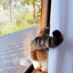 猫のスプレー行為!去勢しても治らない時の予防法とは?