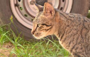 a-cat-789470_960_720