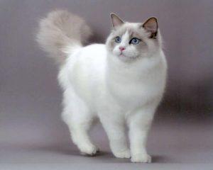 猫 大型3