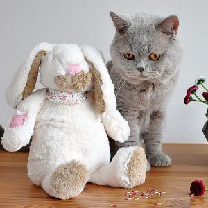 british-shorthair-1272699_1280