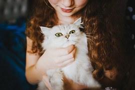 人気猫15