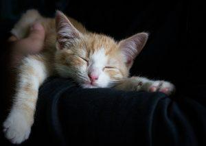 cat-1056662_960_720