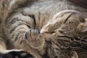 cat-1083426_1280