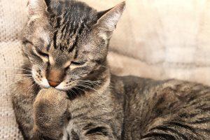 cat-1094713_960_720