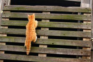 cat-1134615_960_720