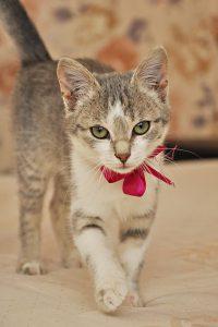 cat-1168845_960_720