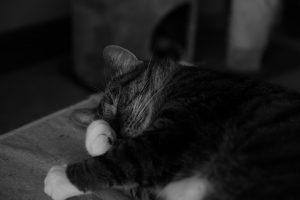 cat-1179006_960_720