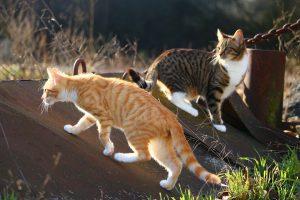 cat-1183095_960_720