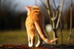 cat-1183139_960_720