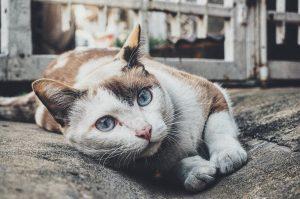 cat-1209067_1280