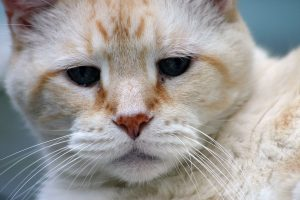 cat-1233034_1280