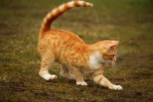 cat-1234998_960_720