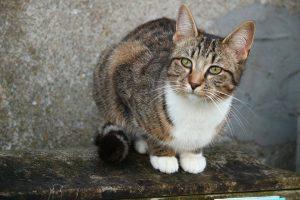 cat-1288523_960_720