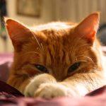 猫から出る臭い汁は病気のサイン?原因と対策を解説!