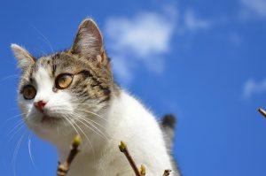 cat-1361967_960_720