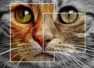 cat-1394585_960_720