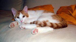 cat-14419_960_720