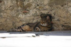 cat-163031_960_720