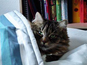 cat-179198_960_720