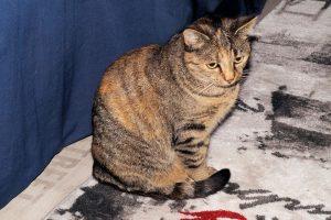 cat-221267_960_720