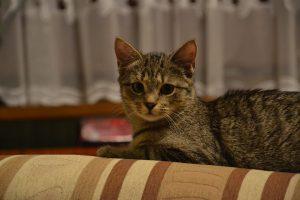 cat-281258_960_720