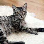 猫の気持ちは目や耳の動きでわかる!?その見分け方とは?